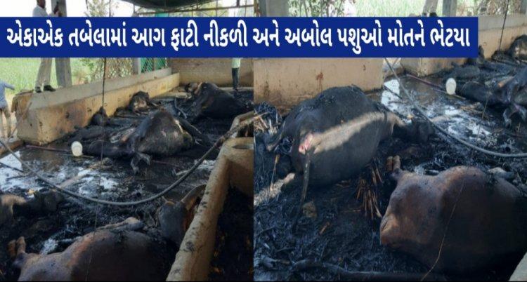 દુર્ઘટના/ નજીકમાં ફાયર સ્ટેશનના અભાવે તબેલામાં આગ લાગતાં 16 ગાય-વાછરડા અને 1 ઘોડીનું મોત