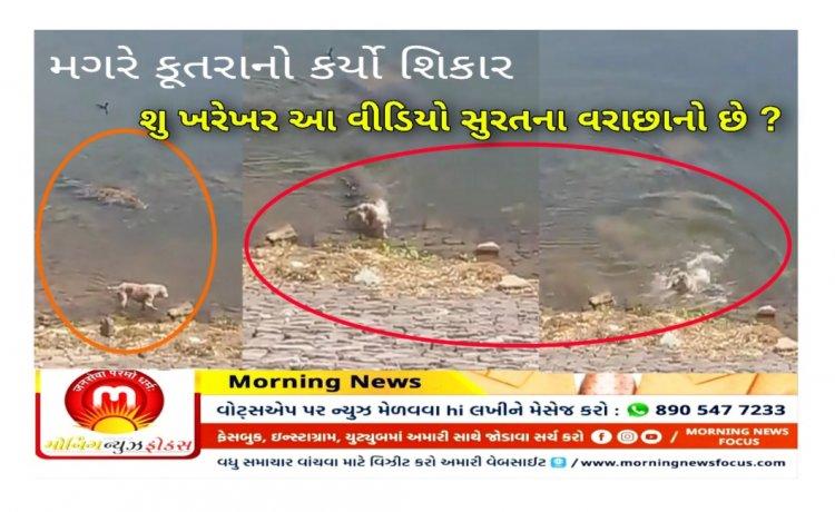 Factcheck : શ્વાન નો શિકાર કરતો મગરનો વિડીયો સુરતની તાપી નદી નો હોવાનો દાવો કેટલો સાચો ? ખરેખર આ વીડિયો ક્યાંનો છે ? જાણો સત્ય